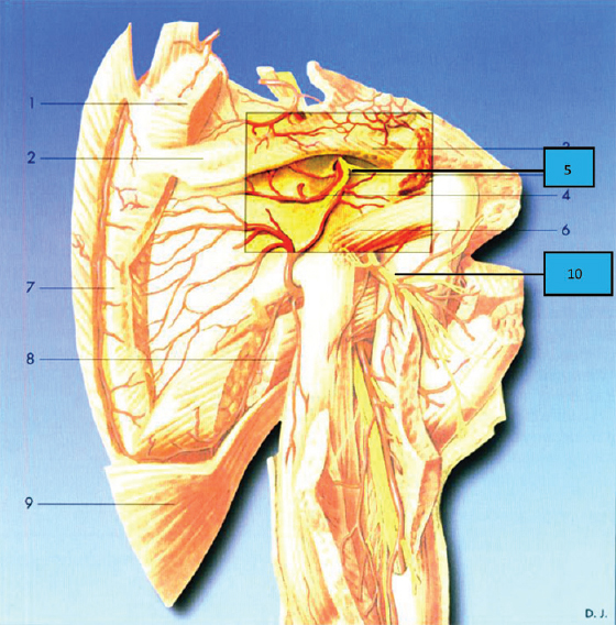 Shoulder Block Versus Interscalene Block For Postoperative Pain